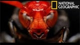Documental National Geographic en Espa�ol, Insectos Mortales (Nat Geo)